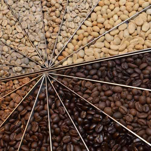 Different Levels of Roasted Coffee Beans Divided Up